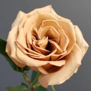 Розы премиум класса